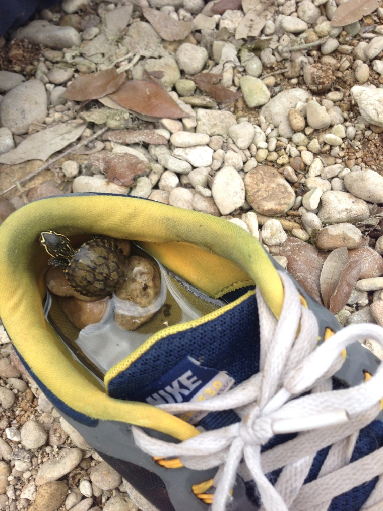 """Benji and his friends are masters of finding """"something new."""" They found this little turtle and kept him """"safe"""" in a shoe."""